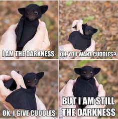 Cute Animal Memes, Funny Animal Quotes, Animal Jokes, Cute Memes, Really Funny Memes, Cute Funny Animals, Cute Dogs, Cute Babies, Funny Quotes