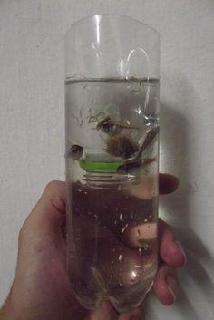 Armadilha para Capturar Peixes Pequenos.  Autor: Mateus Camboim