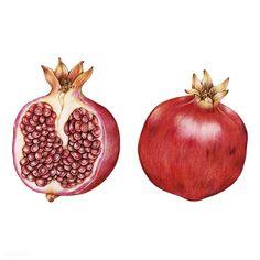Watermelon Illustration, Lemon Watercolor, Fruits Drawing, Fruits Images, Fruits Photos, Fruit Photography, Fruit Party, Fruit Painting, Best Fruits