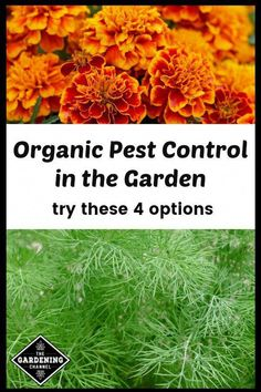 Integrated pest management (IPM) is a broad based ...