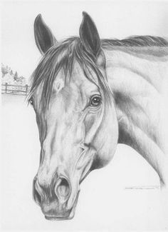 Discover The Secrets Of Drawing Realistic Pencil Portraits.Let Me Show You How You Too Can Draw Realistic Pencil Portraits With My Truly Step-by-Step Guide. Horse Pencil Drawing, Horse Drawings, Art Drawings Sketches, Animal Drawings, Cool Drawings, Pencil Drawings, Drawing Animals, Pencil Art, Horse Head Drawing