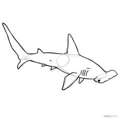 How to Draw a Hammerhead Shark. Hammerheads are a species of sharks that have been named after the shape of their head, which looks like a hammer. They are also one of a few animals that can get a tan by exposing themselves to sunlight. Hammerhead Shark Tattoo, Shark Tattoos, Tatoos, Animal Sketches, Animal Drawings, Drawing Animals, Shark Drawing, Species Of Sharks, Outline Images