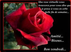 Bon week end Bon Weekend, Happy Friendship Day, Lily, Messages, Rose, Flowers, Plants, Php, Morning Coffee