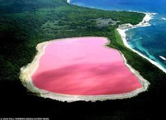 Natural Wonder: Pink Lake in Australia. #travel The lake is not always pink in color but the distinctive color of the water changes as a result of green alga Dunaliella salina, halobacterium Halobacteria cutirubrum, and/or high concentration of brine prawn. Once the lake water reaches