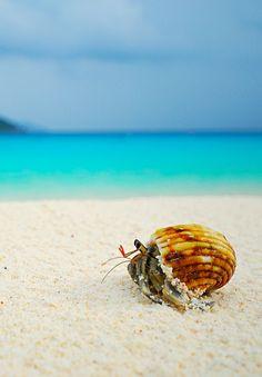 """Hermit crab on similan beach"""