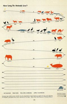 Infographic : How long do Animals live? How long do Animals live? By rdgabino Information graphics, visual representations of data known as infographics, Information Visualization, Data Visualization, Graphisches Design, Layout Design, Informations Design, Timeline Design, Information Graphics, Visual Communication, Grafik Design
