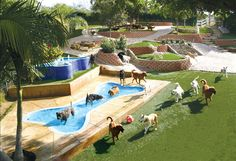 Canyon View Ranch Dog Boarding and Training Facility