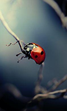 Tiny little beetle.