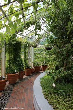 Dekottaa, Kaisaniemen kasvitieteellinen puutarha