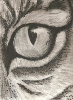 Easy pencil drawings of animals fine art limited edition print of a pencil drawing of an . easy pencil drawings of animals animal drawings pencil art Easy Charcoal Drawings, Charcoal Art, Cool Drawings, Drawing Sketches, Eye Sketch, Flower Drawings, Tiger Sketch, Drawing Skills, Sketch Art