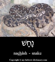 Image result for the word viper in the bible