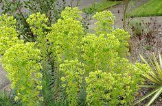 danger garden: April 2013, Bloomday!