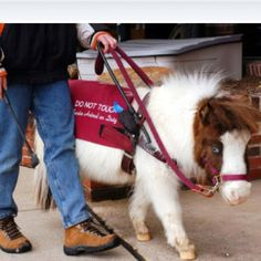 Guide pony. How cool is that? A golden retriever? No, I have a pony.