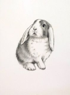 "Rabbit Art, ORIGINAL Charcoal 5""x7"" Lop Eared Rabbit Drawing - Bunny Sketch…"