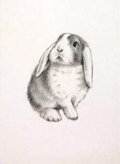 "Rabbit Art, ORIGINAL Charcoal 5""x7"" Lop Eared Rabbit Drawing - Bunny Sketch…"