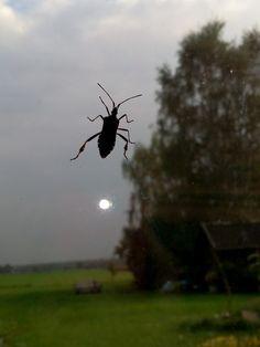 """Ein regnerischer Tag und der Käfer sagt """"Hallo"""""""