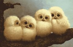 Baby Owls.