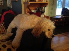 Petit Dodo sur le dessus du coussin du sofa.
