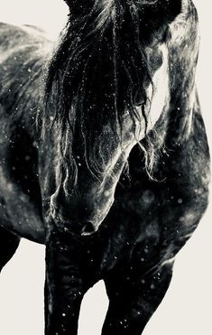 Handsome black horse in what looks like sand , splashed water or snow.