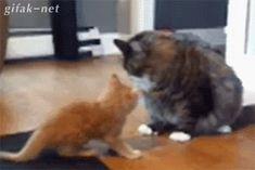 Einmal umschmeißen und man hat seine Ruhe. Katze müsste man sein.