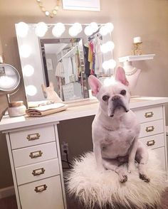 OMG! We can't decide what we love more @thebohobarbie's adorable #frenchie or her gorgeous #ImpressionsVanity?! Featured: #ImpressionsVanityGlowXlPlus in Champagne Gold