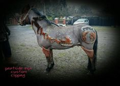 Just when you thought horses could not get any more beautiful, this happens. The folks at Peatside Equi Custom Clipping & JMC Equestrian Driving