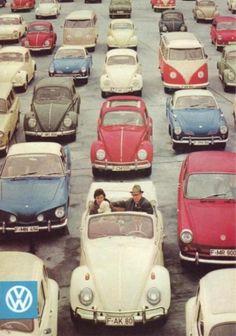 only vintage VWs allowed