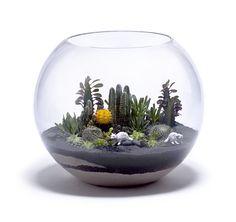 Cactus terrarium bowl