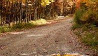 Fall foliage rules for predicting fall foliage