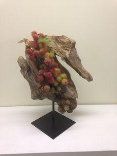 Ikebana  Seedpods  Ricinus communis Rita  Nagelkerke