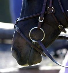 Quirky or Distressed? Why Horses Flap their Lips