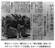 Newspapers spreading news on Hachiko