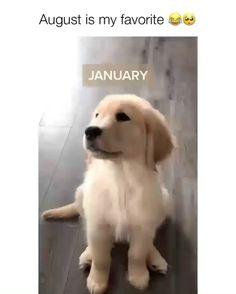 Super Cute Puppies, Cute Baby Dogs, Cute Funny Dogs, Cute Dogs And Puppies, Cute Funny Animals, Cute Cats, Cute Dogs And Cats, Doggies, Baby Animals Pictures