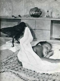 Crow covering sleeping boy. This is not a cue to go steal one from the wild.