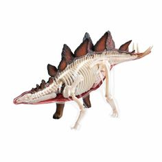 learn about the stegosaurus dinosaur anatomy - 11 inch model  $29.95