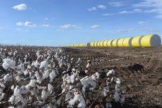 Australian Super Cotton Harvest 2017 | Full Circle Fibres http://fullcirclefibres.com/portfolio-item/australian-super-cotton-harvest-2017/