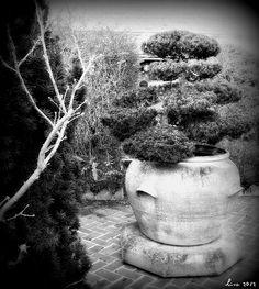 Bonsai by LisaJLangrish, via Flickr