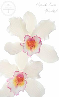 Cymbidium orchid in sugar