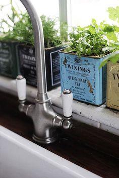kitchen window herbs in tea tins.