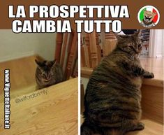 Clicca sull'immagine per visitare il sito. #Animali, #Gatti  #Divertenti, #Funny, #Funnypics, #Humor, #Humour, #Immagini, #Immaginidivertenti, #Italiane, #Lol, #Meme, #Memeita, #Memeitaliani, #Memes, #Memesita, #Memesitaliani, #Umorismo, #Vignette #italianmemes #italianhumor