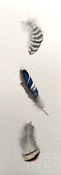 Watercolor Feather by Lorena Fröhlich
