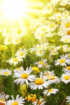 .Beautiful photo of summer daisy meadow...