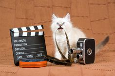 Video DIY: 5 Tips For Making Great Cat Videos With Your Kids | Catster
