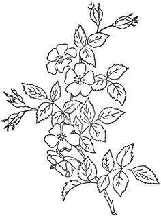 This came from embroiderists photo stream. This image came from Embroiderist's JF Ingalls set Paper Embroidery, Rose Embroidery, Hand Embroidery Patterns, Vintage Embroidery, Embroidery Applique, Quilling Patterns, Craft Patterns, Learning To Embroider, Flower Clipart