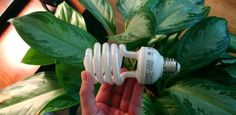 How to Grow Houseplants in Artificial Light | Todays Homeowner