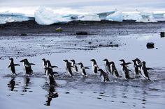 Penquins, Antarctica, via Flickr.