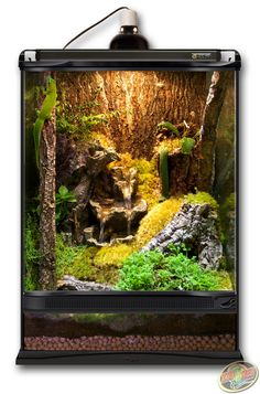 12x12x18 Zoo Med Terrarium built as a Giant Day Gecko habitat. DIY this terrarium with Hydroballs, Eco Earth, Frog Moss, Cork Flats, Cork Rounds, ReptiRapids Medium Wood Waterfall, and live plants of your choosing.