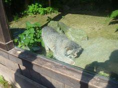 animali e natura : parco faunistico - Agrate Conturbia Novara