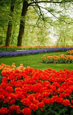 The Tulip Gardens, Holland / Keukenhof Festival - The Londoner