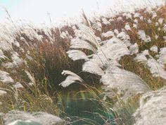 Rap Monster ❤ [Bangtan Trans Tweet] 11월의 억새 #RM  November's silver grass #RM #BTS #방탄소년단